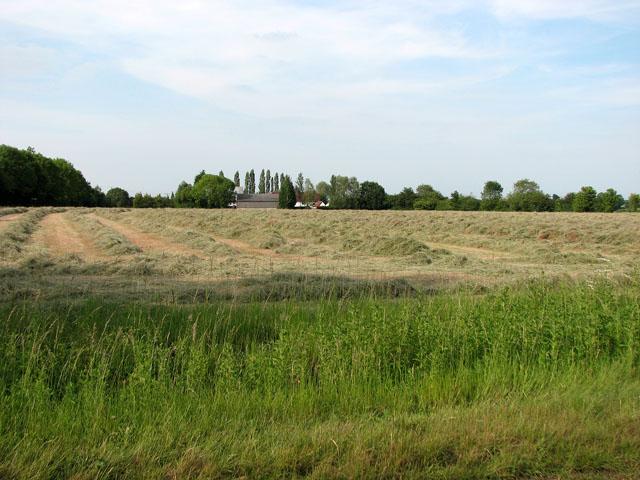 Hay meadow by Green Farm, Cookley Green