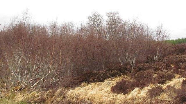 Scrub woodland, Overscaig