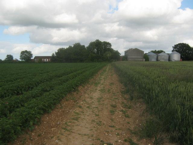 Footpath towards Stelling Lodge Farm