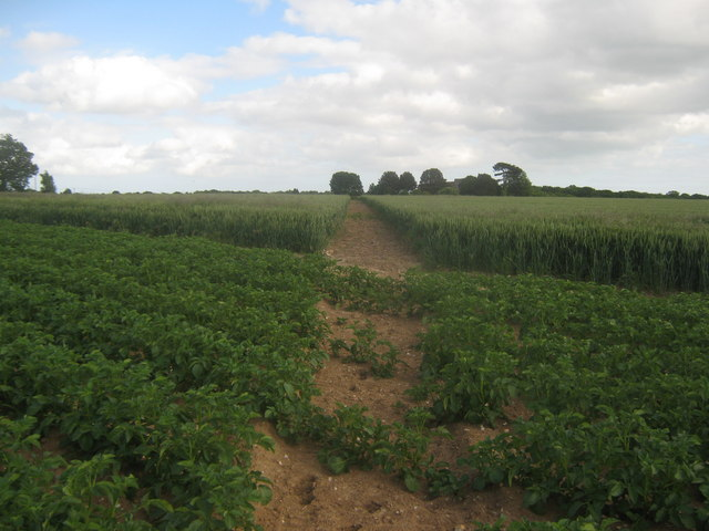 Footpath junction near Stelling Lodge farm