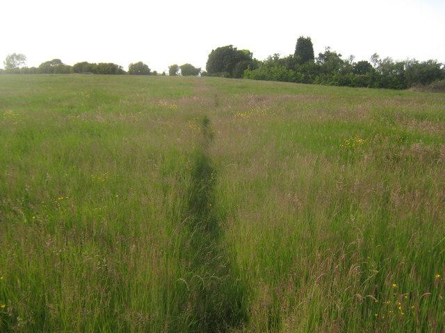 Footpath towards Petham