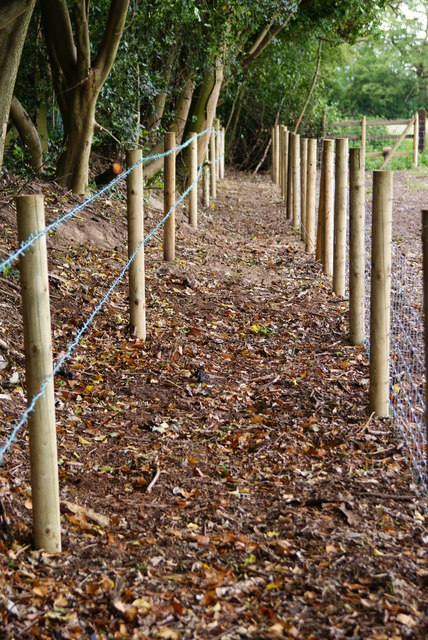 Footpath Near Lingfield, Surrey