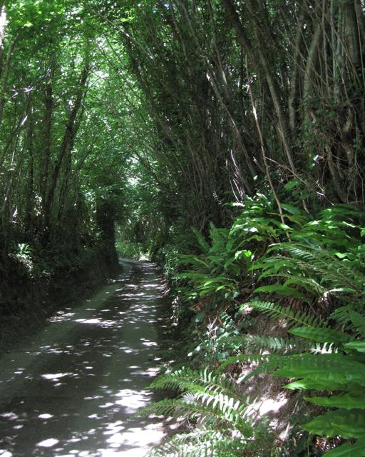 Lane to Higher Lake
