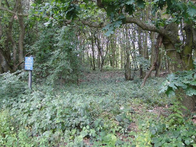Woodland beside the B1062