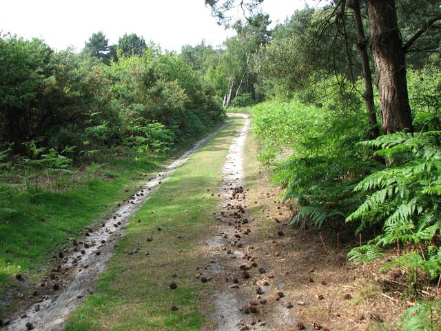 Track traversing Walberswick Heath