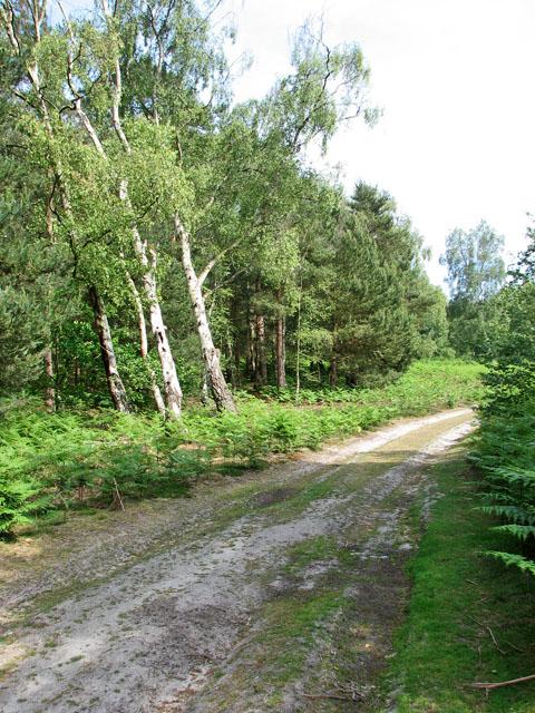 Path in Walberswick National Nature Reserve