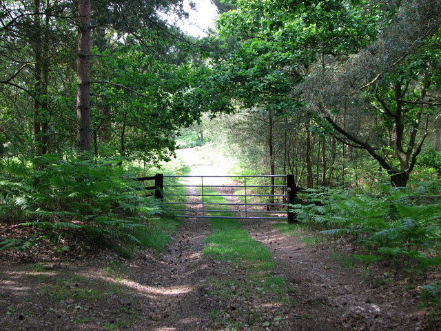 Gate on woodland track