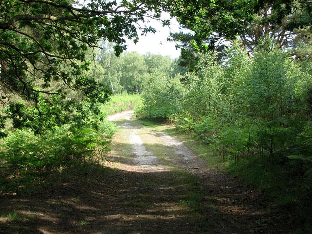 A sunny summer's day in Walberswick Heath
