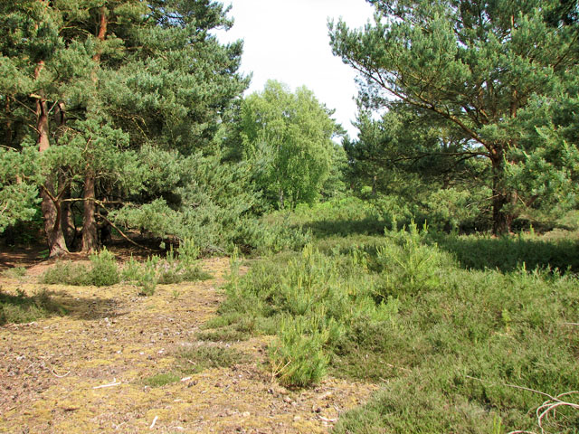 Heath and woodland in Walberswick National Nature Reserve