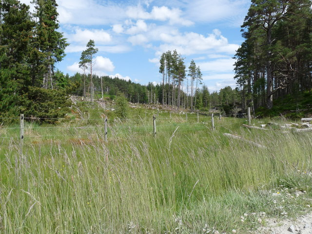 Partially cleared forestry, Glengarry Forest