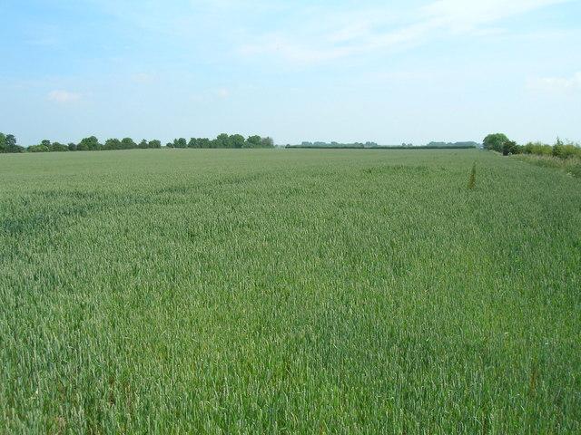 Farmland near North End Farm