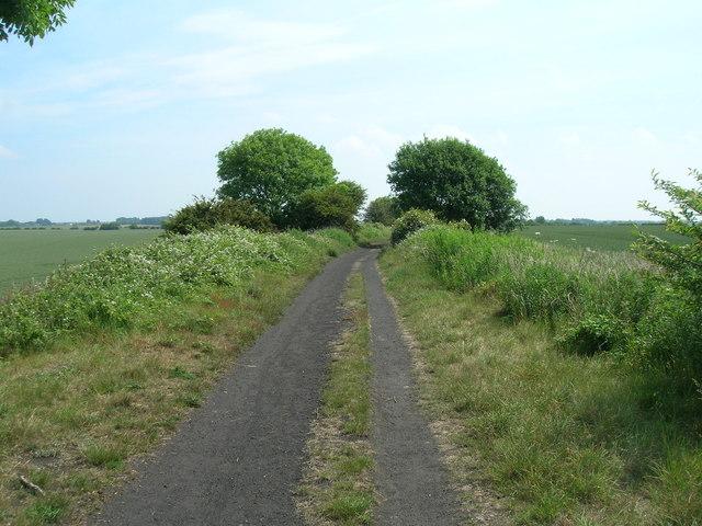 Cycle track towards Patrington
