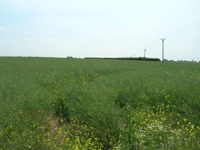 Farmland near Ottringham