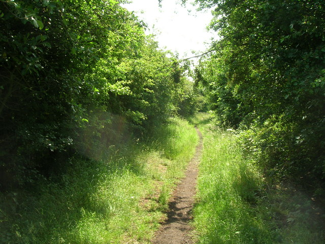 Cycle track towards Patrington
