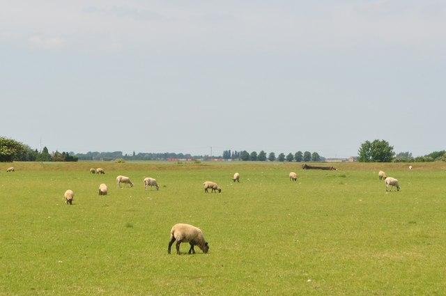 View of the Cambridgeshire fens