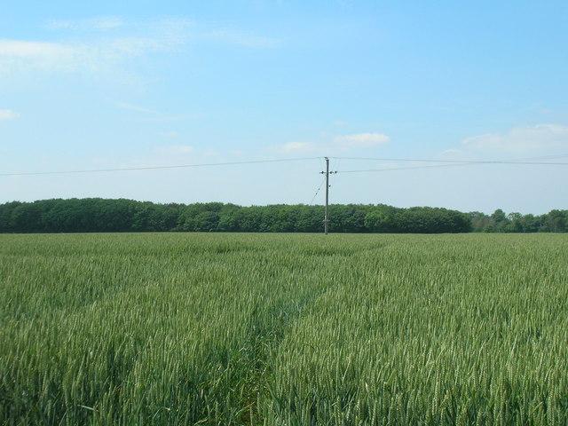 Farmland looking towards Thorp's Plantation