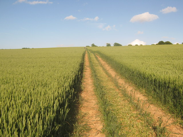 Bridleway to Chequers Hill