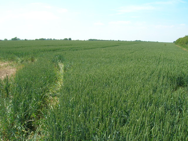 Farmland off Arables Lane