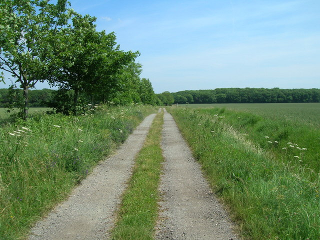 Track to Weldon's Cottage
