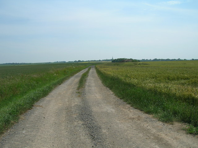 Farm track east of Winestead