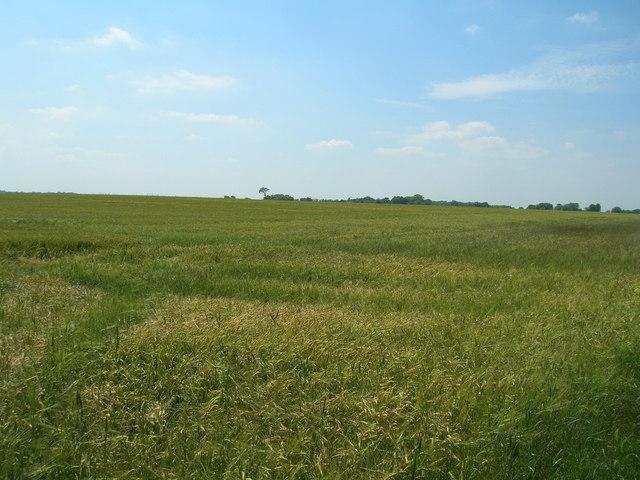 Farmland east of Winestead