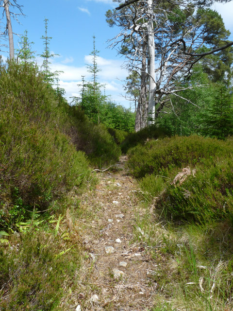 Path above the Laddie Burn, Glengarry Forest