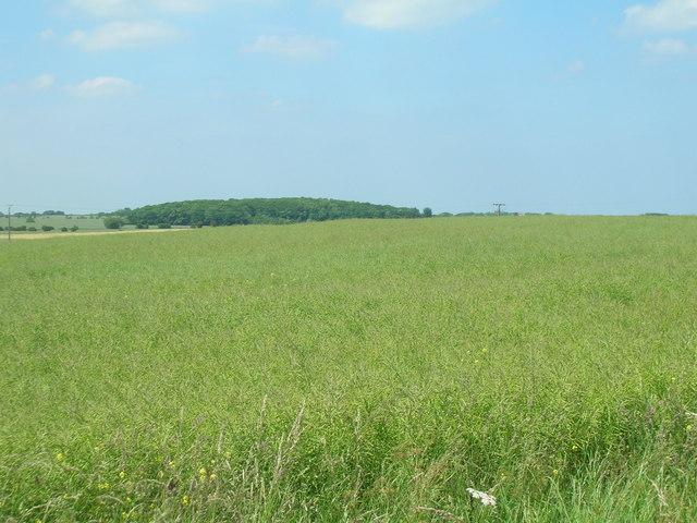 Farmland near Patrington
