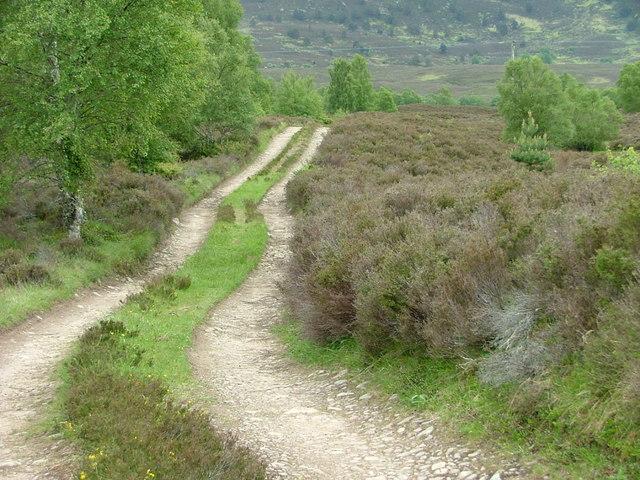Track to Delbog