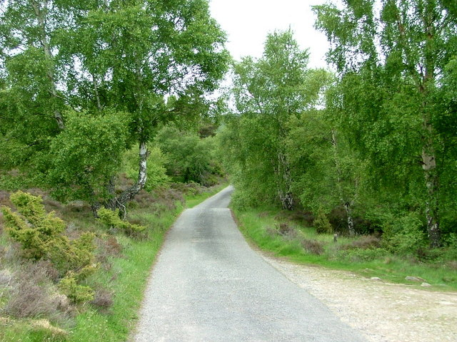 Birch lined road at Tulloch