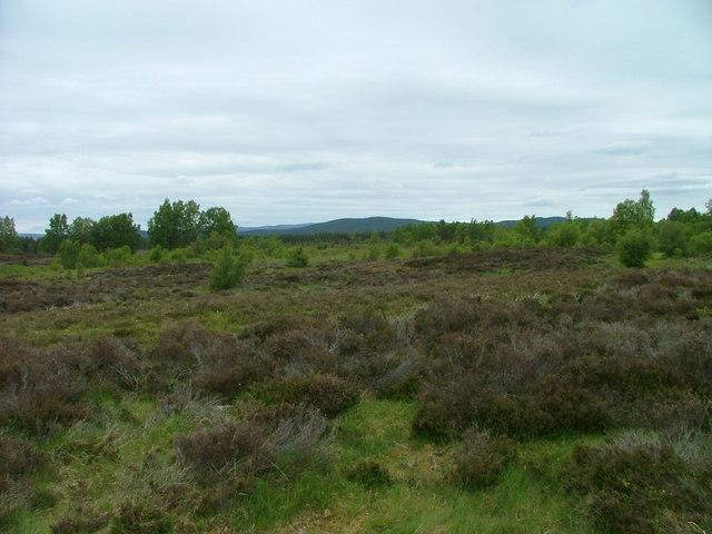 Tulloch Moor