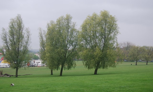 Trees on Streatham Common