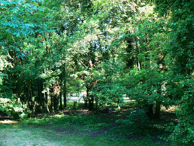 Small woodland by the Roman amphitheatre, Cirencester