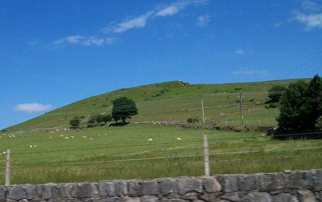 Grazing sheep on the western slopes of Y Moelfre