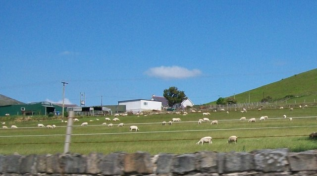 Sheep pastures on the outskirts of Llanaelhaearn