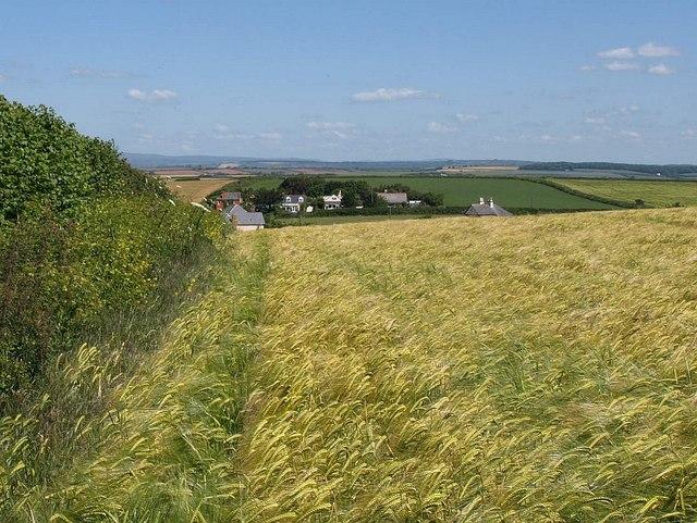 Field of barley near Galmpton