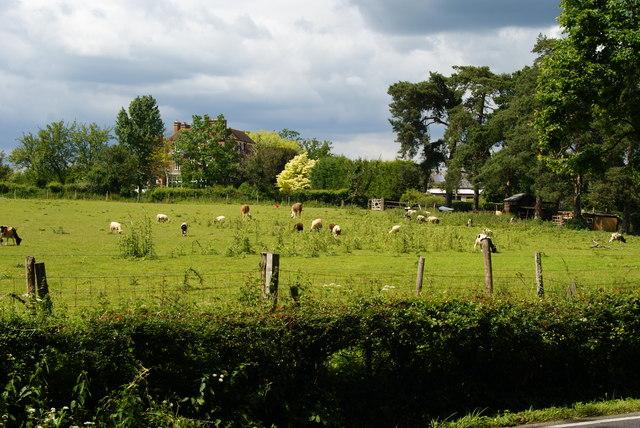 View Towards Shawlands, Newchapel, Surrey