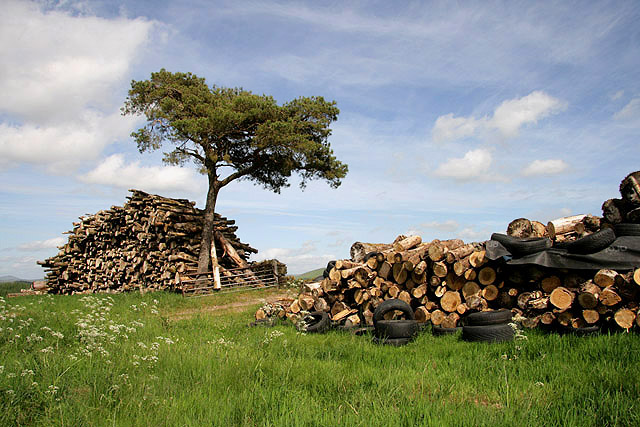 Log stacks at Lethem and Hass Forest