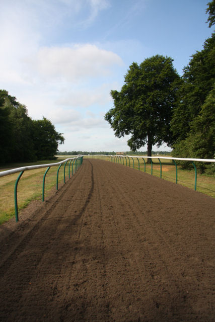 Gallops near Chippenham Junction