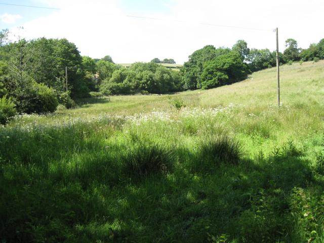 Wet meadow opposite Higher Lake Farm