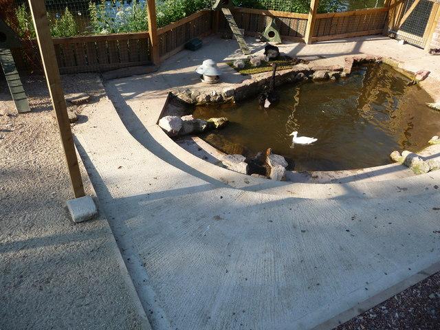 Dawlish : Waterfowl Enclosure