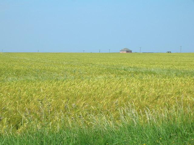 Farmland near Hollym