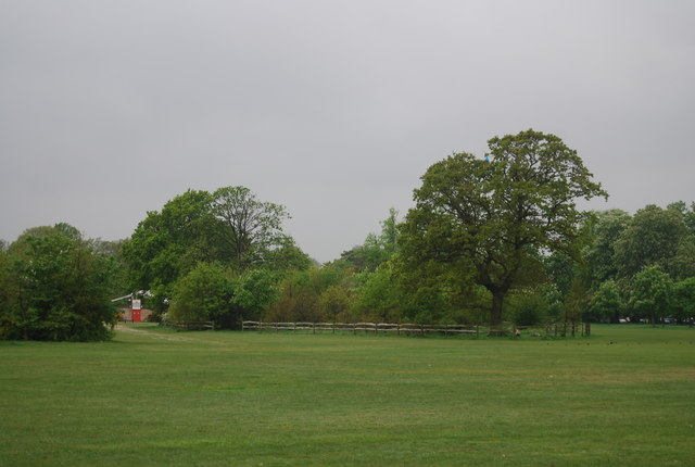 Trees, Tooting Bec Common
