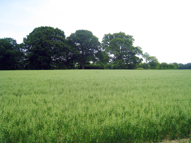 Wheat Field off Woodgate