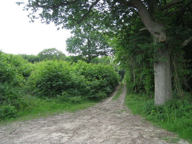 Gorsley Wood