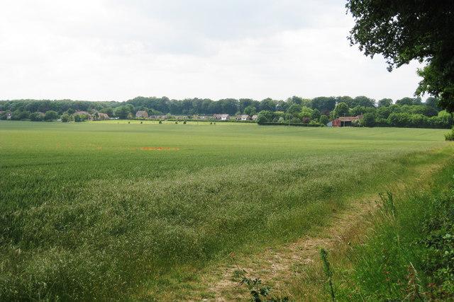 Crop Field off School Lane