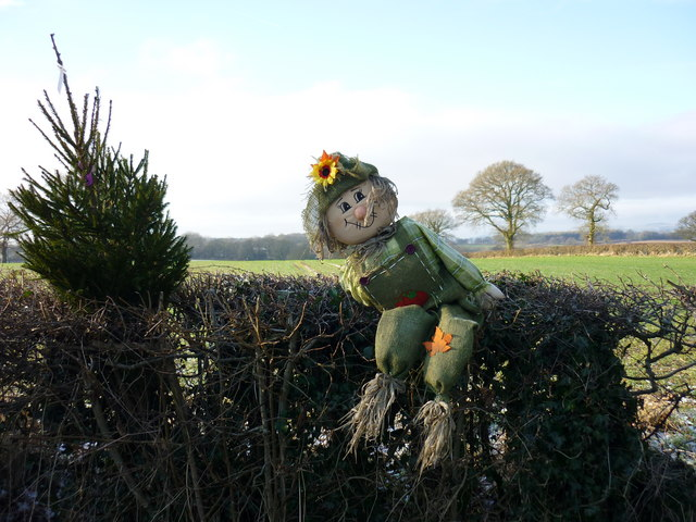 Wyaston Hedge Troll