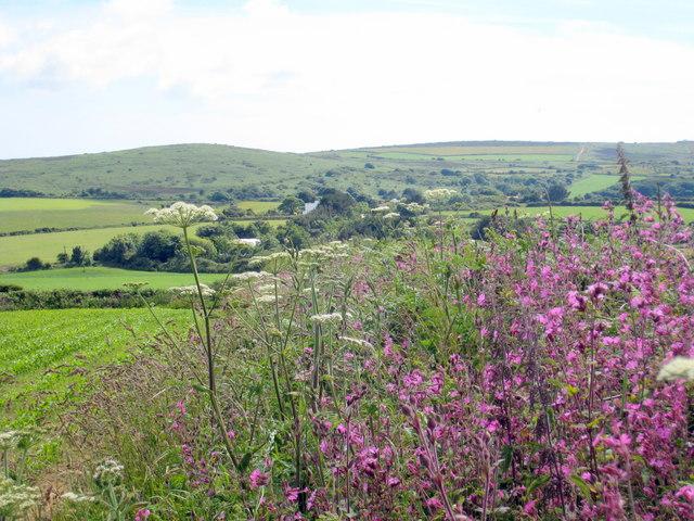 Hedgerow near Trannack Farm