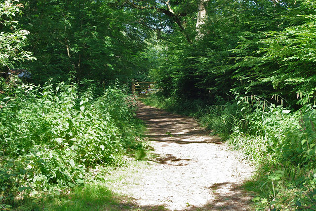 Main path out of Hammond's Copse