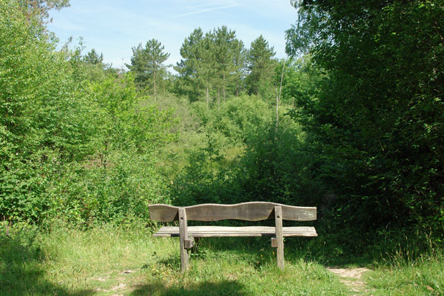 Seat with limited prospect, Hammond's Copse