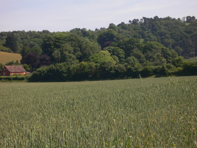 View across wheatfield north of Chilworth